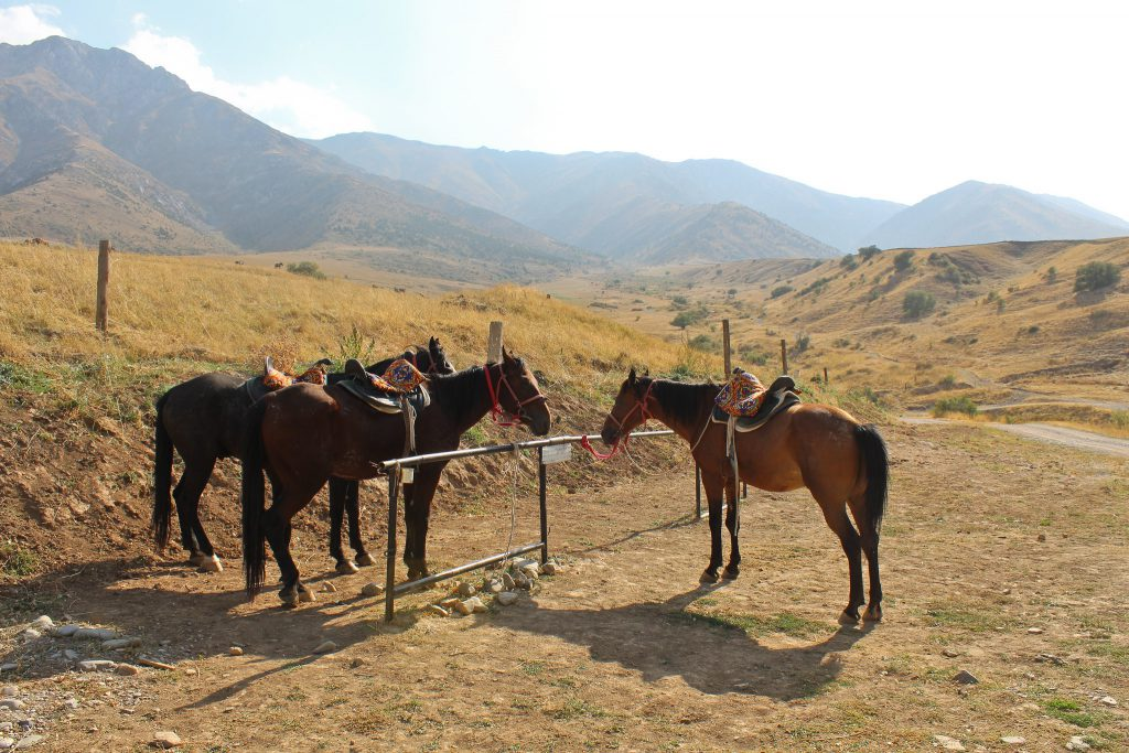 Horses waiting for the horse ride into Aksu-Zhabagly