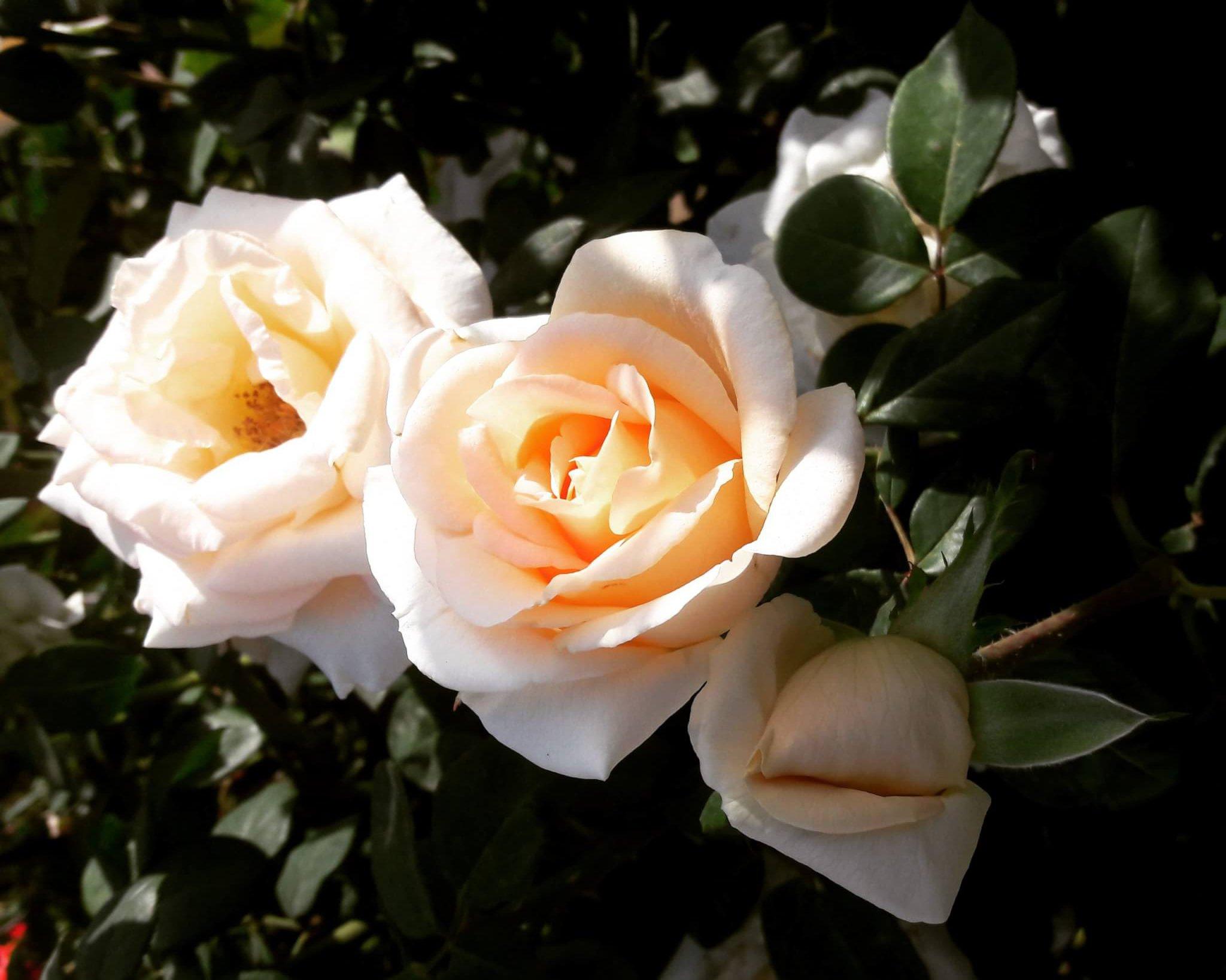 Info Shymkent - Happy Women's Day