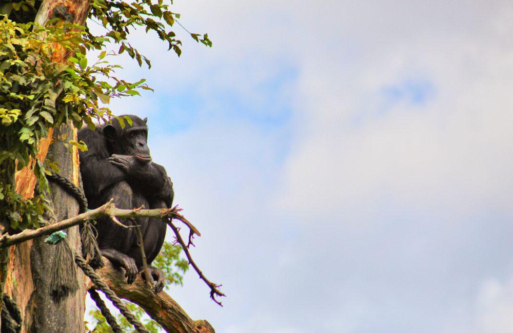 Info Shymkent - Monkeys in Zoo Leipzig