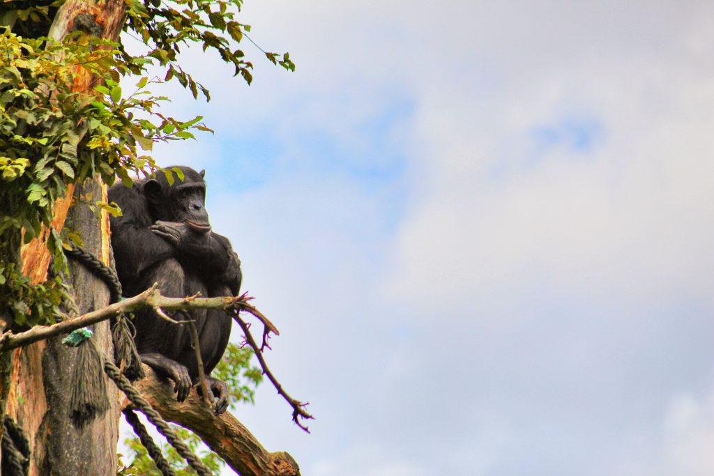"""Info Shymkent made """"Monkey Gallery"""""""