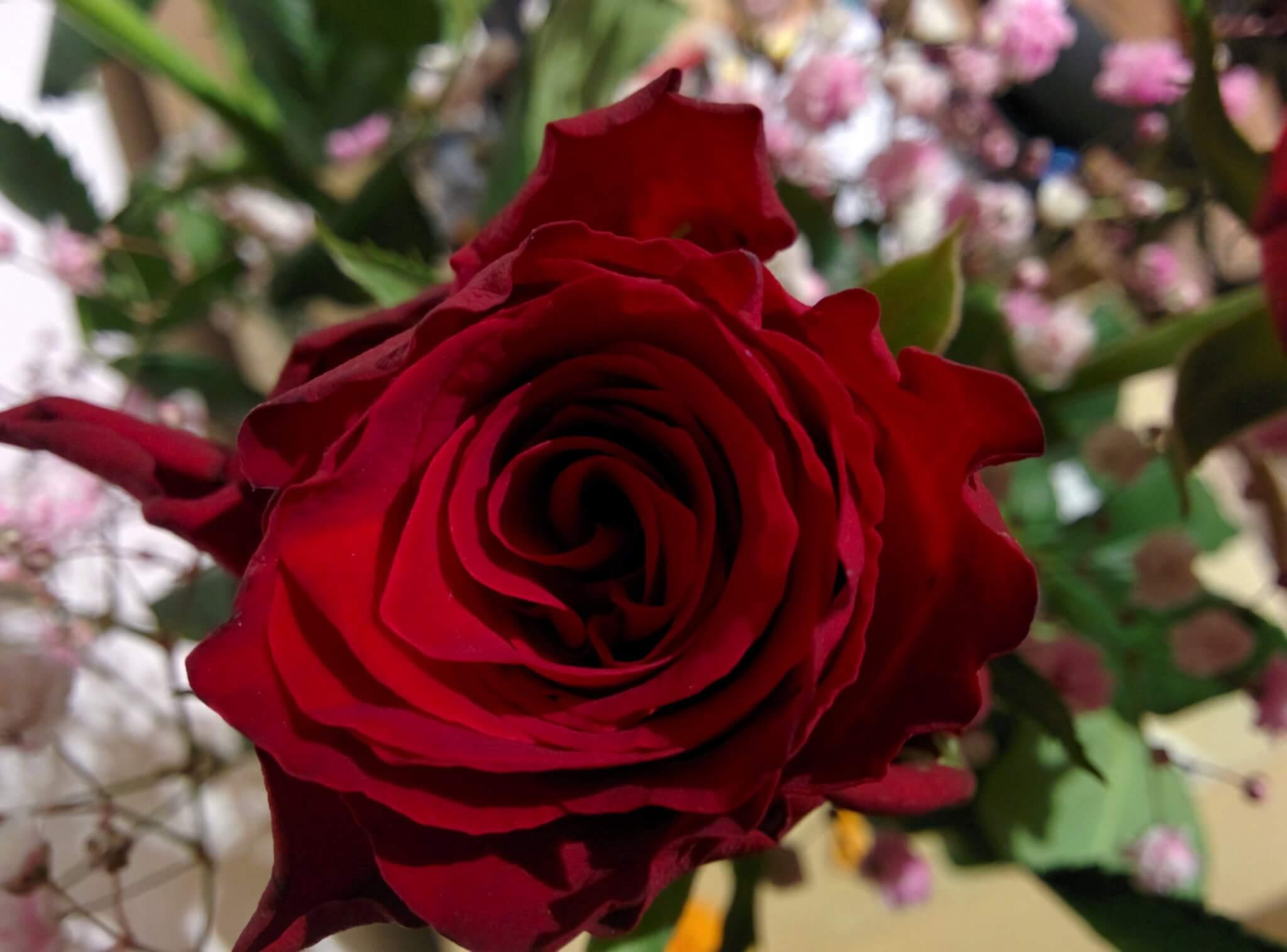 Info Shymkent - Happy Valentines Day