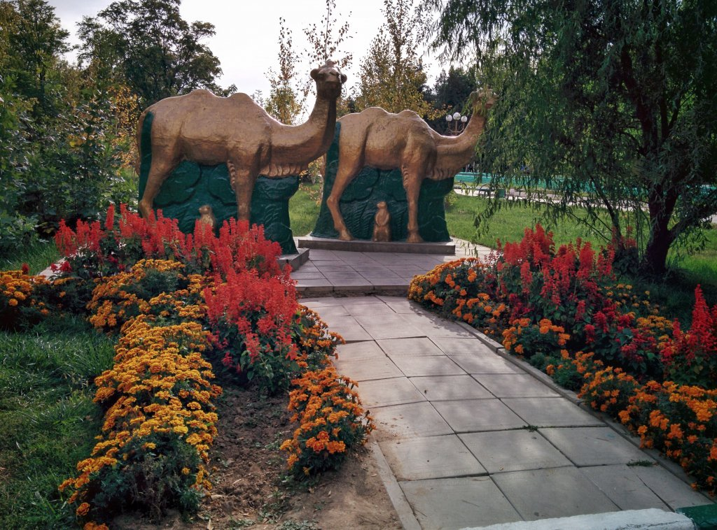 Info Shymkent - Camels in the Dendropark