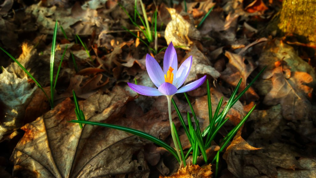 Info Shymkent made forest and flower photo.