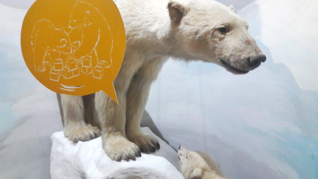 Info Shymkent - Polar bear in Naturkundemuseum.