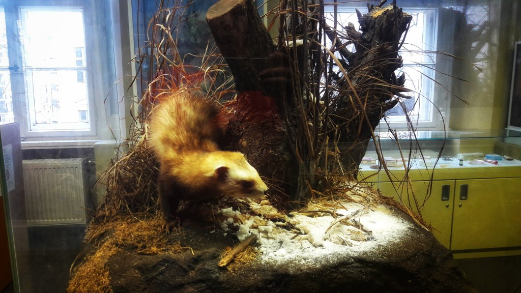 Info Shymkent - Naturkundemuseum's taxidermy animals.