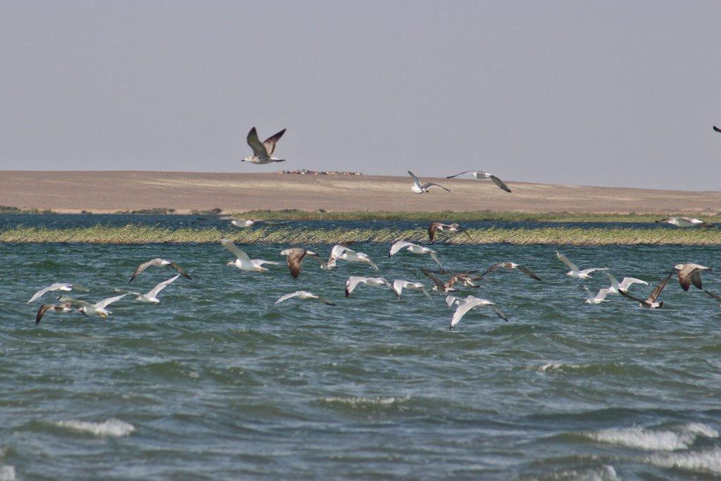 Info Shymkent - Lake Kamistibas