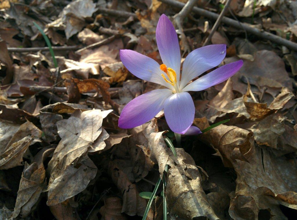 Info Shymkent showed spring photo.