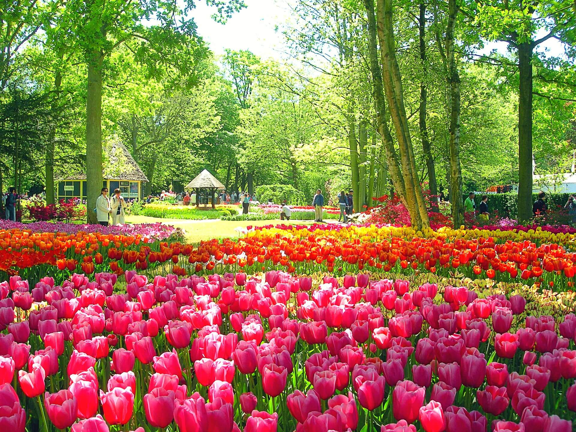 Info Shymkent - A carpet of Tulips in the Keukenhof, Netherlands