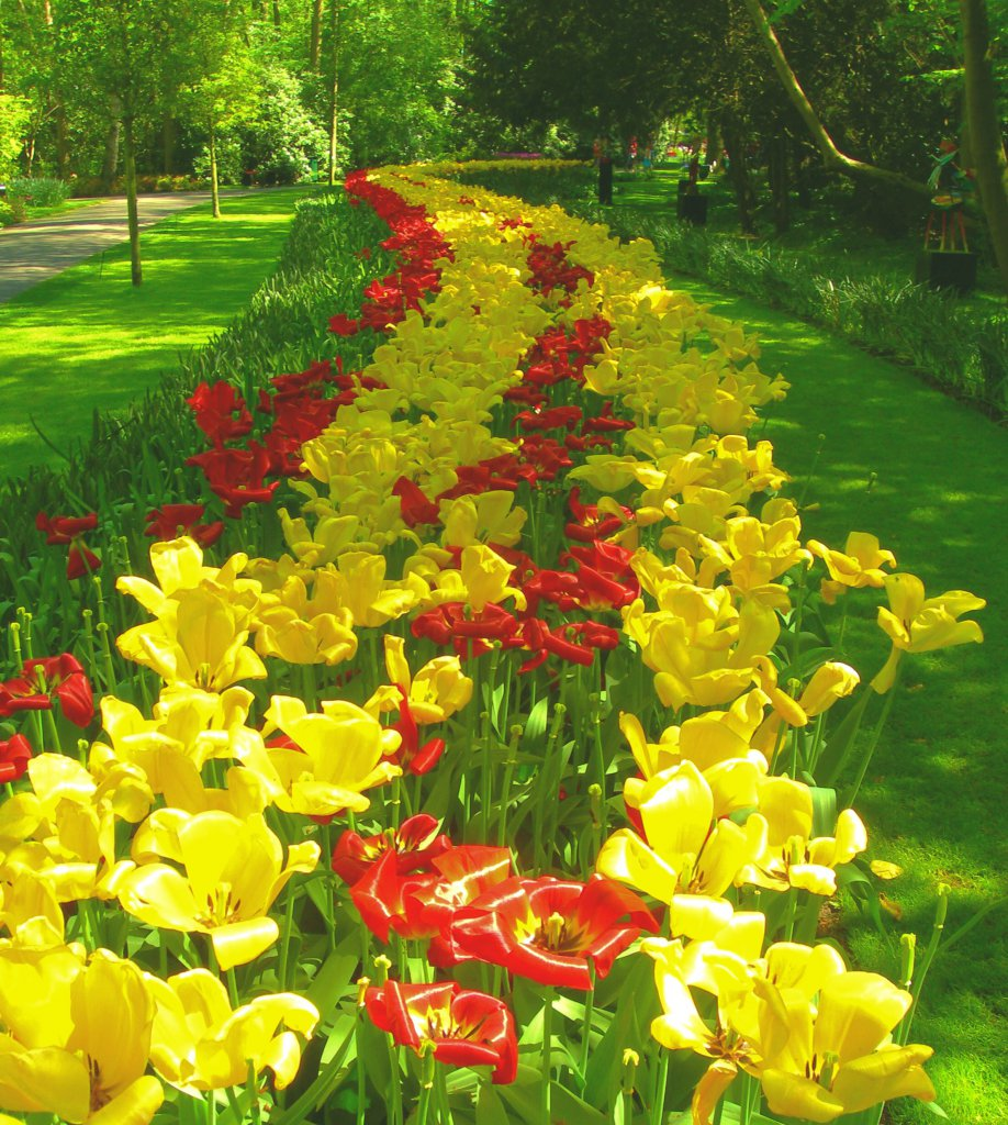 Info Shymkent - Tulips in the Keukenhof, Netherlands