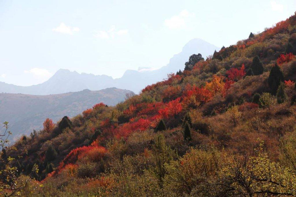 Indian Summer - Autumn in South Kazakhstan.