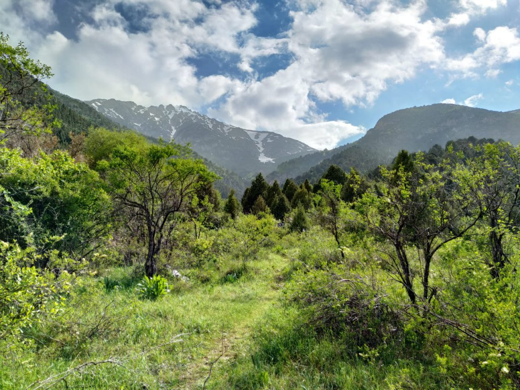 Trees at the slope of Sayram Su Mountains in South Kazakhstan.