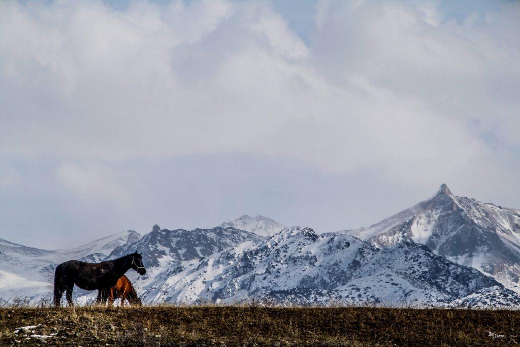 Info Shymkent - Wild horses in front of Tian Shan mountains (by Dana Madaliyeva)