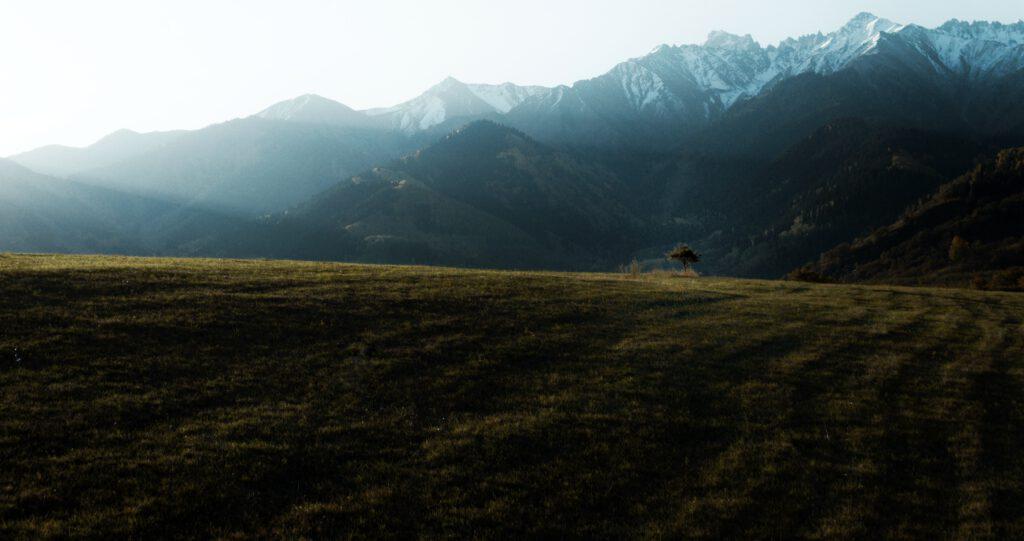 Info Shymkent - Brilliant scene of lonely tree in Tian Shan Mountains in Kazakhstan by Nursultan Baikenov