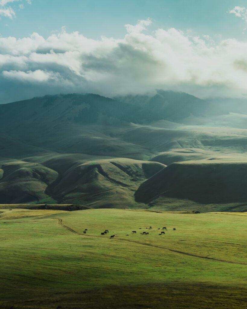 Info Shymkent - Mikhail Vershkov - Green Steppe of Kazakhstan
