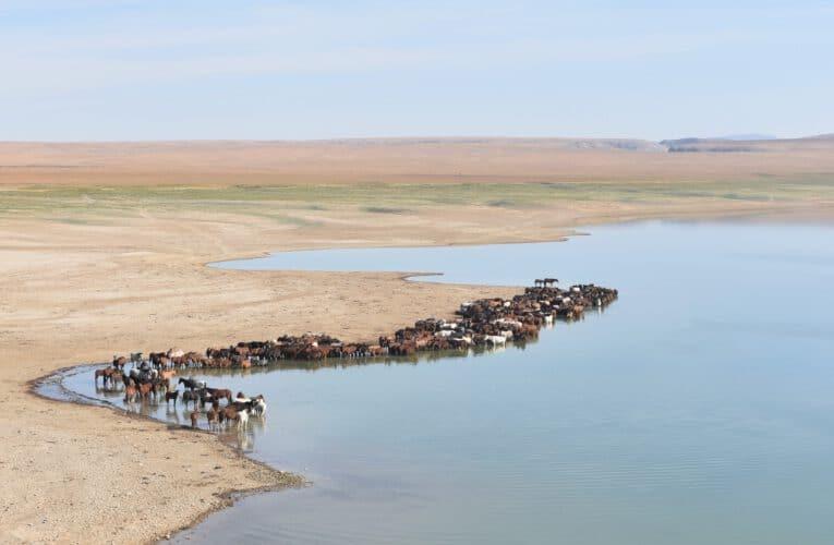 An eye on the nature – Wildlife photographer Qudaibergen Amirkulov